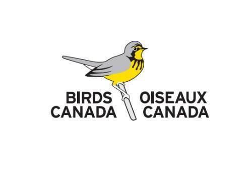 New BSC Logo